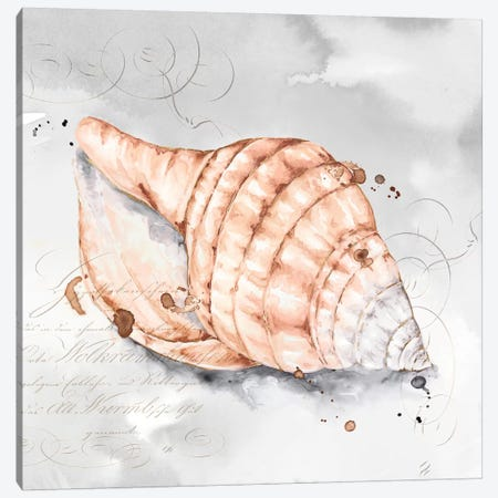 Blush Shell I  Canvas Print #EWA90} by Eva Watts Canvas Art Print