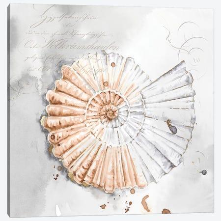 Blush Shell II  Canvas Print #EWA91} by Eva Watts Canvas Art Print