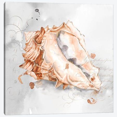 Blush Shell III  Canvas Print #EWA92} by Eva Watts Canvas Print