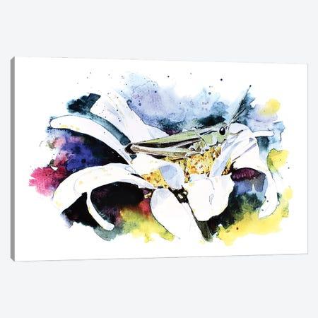 Grasshopper Canvas Print #EWC104} by EdsWatercolours Canvas Artwork