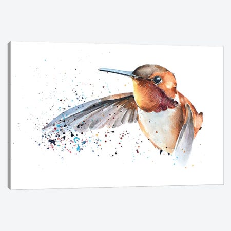 Humming Bird Canvas Print #EWC114} by EdsWatercolours Canvas Art Print