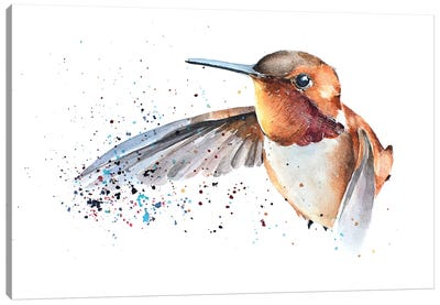 Humming Bird Canvas Art Print