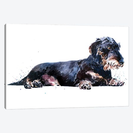 Keep Calm And Relax The Wirehaired Dachshund Way Canvas Print #EWC123} by EdsWatercolours Canvas Art Print