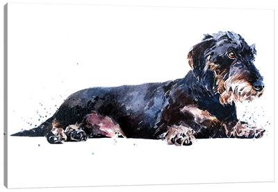 Keep Calm And Relax The Wirehaired Dachshund Way Canvas Art Print