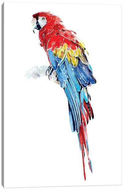 Macaw Canvas Art Print