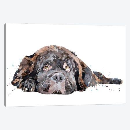Newfoundland Dog 3-Piece Canvas #EWC144} by EdsWatercolours Canvas Wall Art