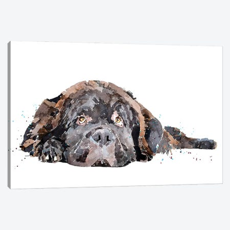 Newfoundland Dog Canvas Print #EWC144} by EdsWatercolours Canvas Wall Art