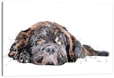 Newfoundland Dog Canvas Art Print