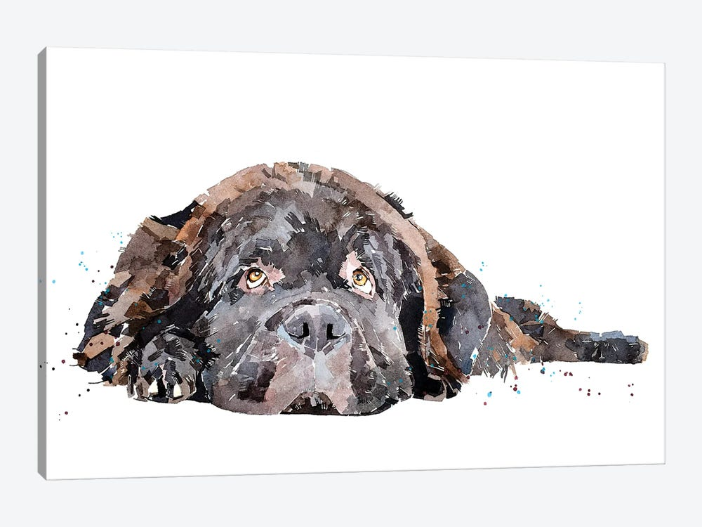 Newfoundland Dog by EdsWatercolours 1-piece Canvas Artwork