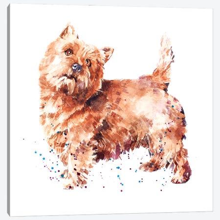 Norwich Terrier Canvas Print #EWC146} by EdsWatercolours Canvas Wall Art