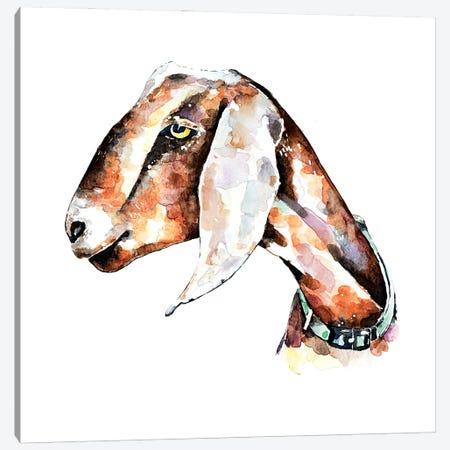 Nubian Goat I Canvas Print #EWC148} by EdsWatercolours Canvas Art Print