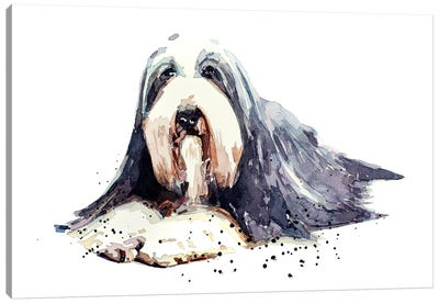 Bearded Collie I Canvas Art Print