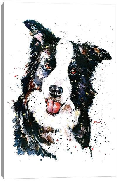 Pursuit Of Hapiness Border Collie Canvas Art Print