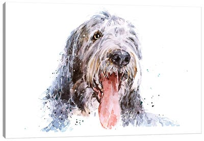 Bearded Collie II Canvas Art Print