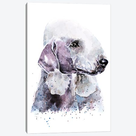 Bedlington Terrier I Canvas Print #EWC17} by EdsWatercolours Canvas Artwork