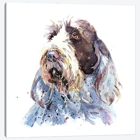 Spinone I Canvas Print #EWC183} by EdsWatercolours Canvas Print