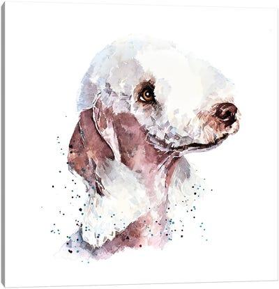 Bedlington Terrier II Canvas Art Print