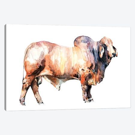 Texan Brahman Bull Canvas Print #EWC192} by EdsWatercolours Canvas Artwork