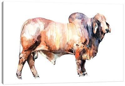 Texan Brahman Bull Canvas Art Print