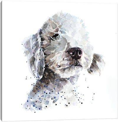 Bedlington Terrier III Canvas Art Print