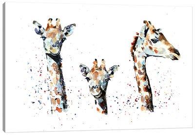Tres Amigos Giraffees Canvas Art Print