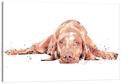 Vizsla Flat Out Canvas Art Print