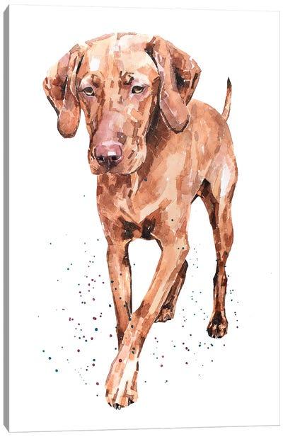 Best Foot Forward Vizsla Canvas Art Print