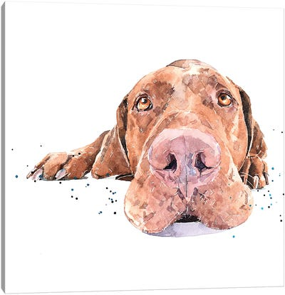 Vizsla Passed Out Canvas Art Print