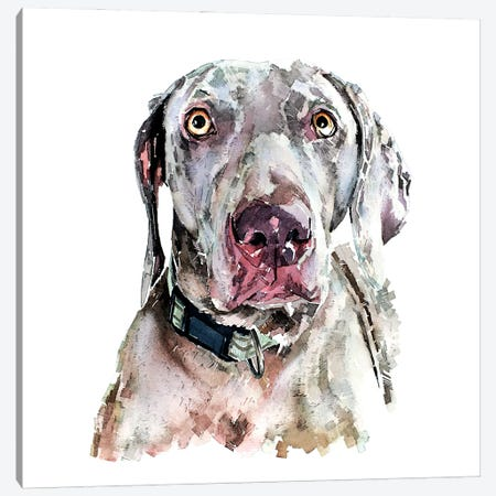 Weimaraner II Canvas Print #EWC218} by EdsWatercolours Canvas Print