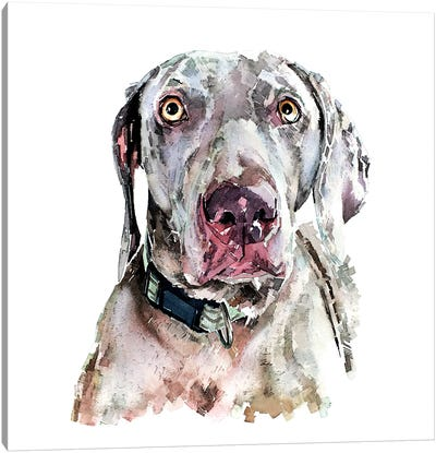 Weimaraner II Canvas Art Print