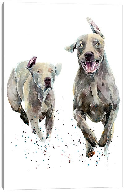Weimaraner Runners Canvas Art Print
