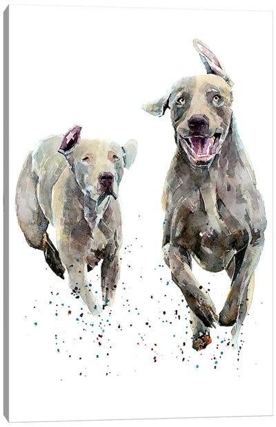 Weimaraner Runners Canvas Art Print