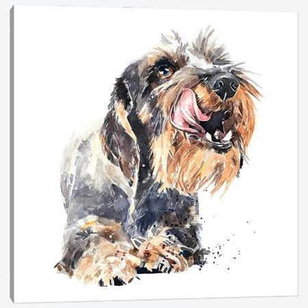 Wirehaired Dachshund I Canvas Print #EWC235} by EdsWatercolours Canvas Artwork