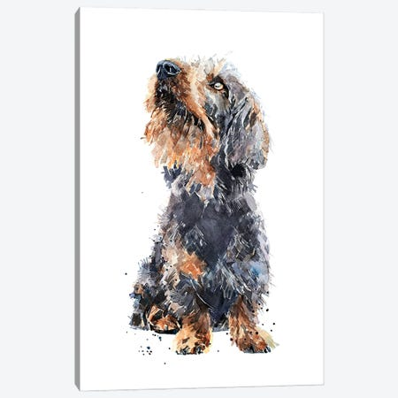 Wirehaired Dachshund II Canvas Print #EWC236} by EdsWatercolours Canvas Wall Art
