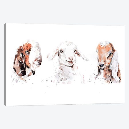 Boer Saneen And Nubian Goat Kids. The Three Kings Canvas Print #EWC34} by EdsWatercolours Canvas Wall Art