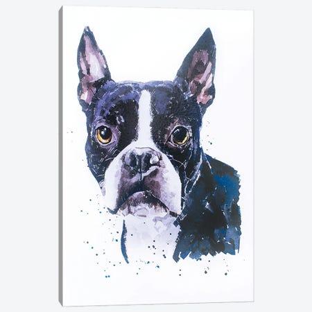 Boston Terrier Canvas Print #EWC36} by EdsWatercolours Canvas Art