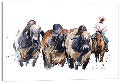 Brahman Cattle And Cowboy Canvas Art Print