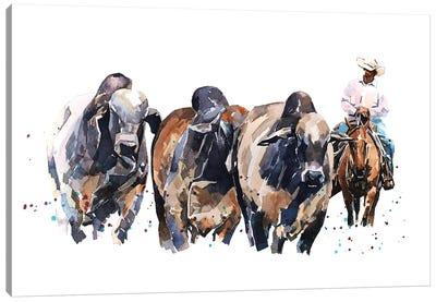 Brahman Cattle And Cowboy Canvas Art Print