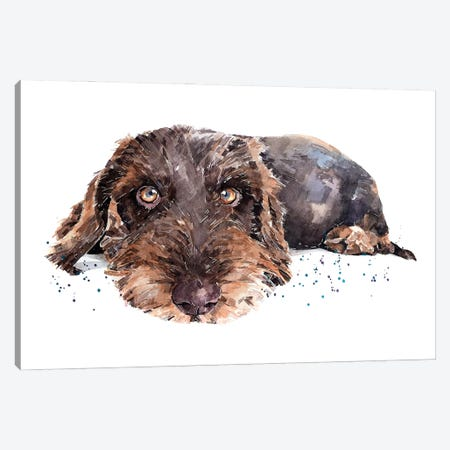 Brown Wirehaired Dachshund Canvas Print #EWC44} by EdsWatercolours Art Print