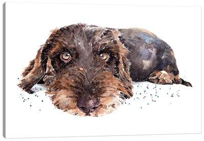 Brown Wirehaired Dachshund Canvas Art Print