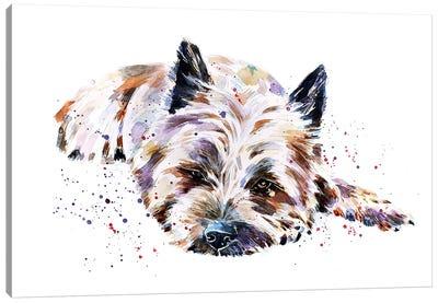 Cairn Terrier I Canvas Art Print