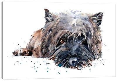 Cairn Terrier II Canvas Art Print