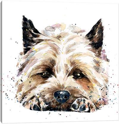 Cairn Terrier In Your Face Canvas Art Print