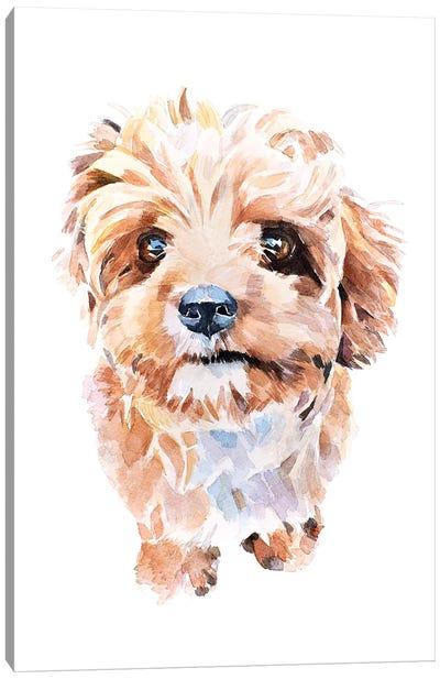 Cockapoo II Canvas Art Print