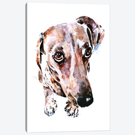 Dachshund Soulful Eyes Canvas Print #EWC63} by EdsWatercolours Canvas Art