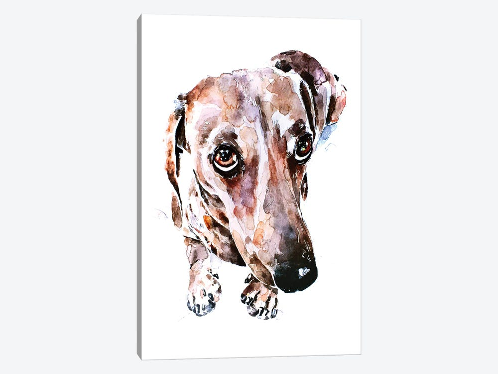 Dachshund Soulful Eyes by EdsWatercolours 1-piece Canvas Art Print