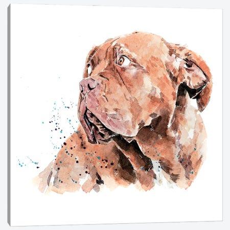 Dogue De Bordeaux I Canvas Print #EWC72} by EdsWatercolours Canvas Print