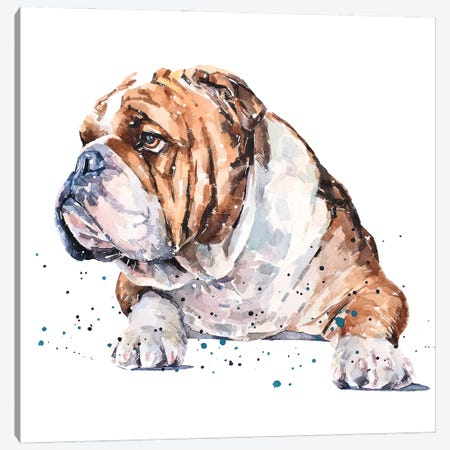 English Bull Dog I Canvas Print #EWC81} by EdsWatercolours Canvas Art