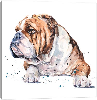 English Bull Dog I Canvas Art Print