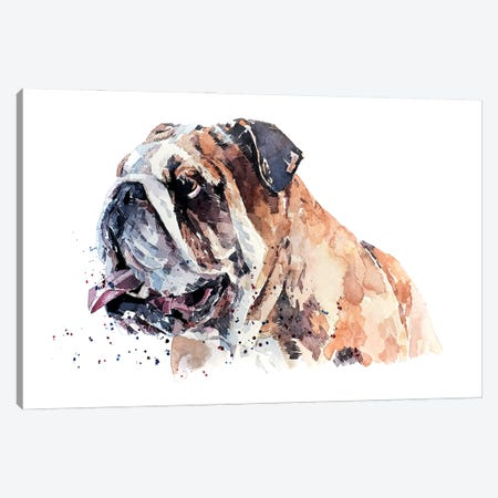 English Bull Dog II Canvas Print #EWC82} by EdsWatercolours Canvas Art